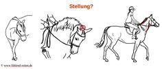 """Blog von www.fühlend-reiten.de: """"Schule Dein Gefühl"""" und wie ich die Hilfen als Hilfen nutze, nicht als Befehl"""