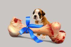 Jak dobierać kości dla psa?