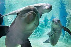 Δελφίνια - Ακούστε τα παιδιά! (Βίντεο)