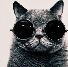 """bauhaus-movement: """"Le Catbusier © Andy Prokh Corbusier Architect Cat """""""