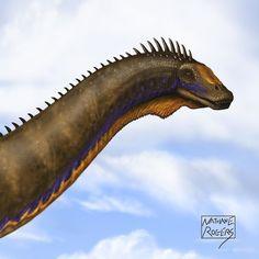 Apatosaurus - Nathan Rogers