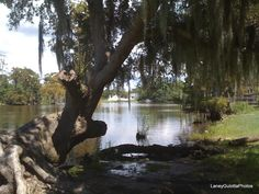Fairview Riverside State Park, a Louisiana State Park located nearby Covington, Hammond and Lacombe - I was on the cover of a trade magazine and chose this location with me in a tiny old kayak I owned for the image. Covington Louisiana, Louisiana Swamp, Lake Pontchartrain, Rv Parks And Campgrounds, Family Camping, Walking In Nature, Southern Living, Vacation Spots, Alter