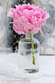 Florets-Floral Quote-# 114-Peony-by Shane Connolly-Ingrid Henningsson-Of Spring and Summer