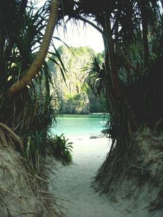 jungle scenery with white sand by the crystal blue ocean sea beach on a tropical island paradise like hawaii Places To Travel, Places To See, Travel Destinations, Hidden Places, Adventure Is Out There, Dream Vacations, Beach Vacations, Beautiful Beaches, Beautiful World
