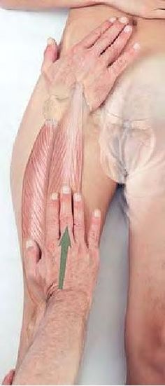 Quadriceps muscle group - massage for relief, stripping up-ward