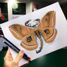 Scorpion Moth Pencil Drawing by AtomiccircuS on @DeviantArt