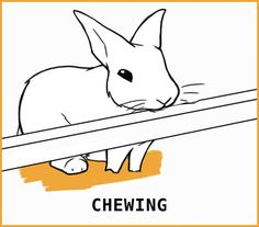 Rabbit Body Language: An Illustrated Guide Rabbit Run, Silly Rabbit, Rabbit Toys, Pet Rabbit, Lionhead Rabbit, Pet Bunny Rabbits, Bunnies, Rabbit Behavior, Female Rabbit