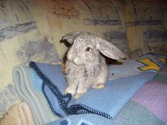 meine Hoppel-Hasen