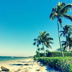 Sandy beach + Palm trees =  Sanibel  #sanibelstar #island -#beach