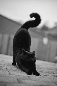 Black cat http://www.leohaircare.com/moroccan-oil-moisture-repair-shampoo-16-oz.html