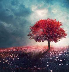 Segue teu destino, rega tuas plantas, Ama as tuas rosas. O resto é sombra de árvores alheias..... Vê de longe a vida. Nunca a interrogues. Ela nada pode dizer-te.A resposta , está além dos Deuses. Fernando Pessoa