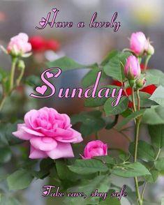 Stay Safe, Take Care, Sunday, Rose, Flowers, Plants, Domingo, Pink, Plant