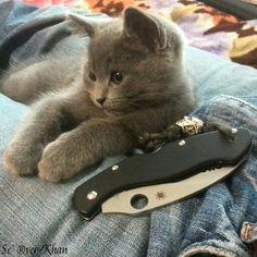 Kitty & Spyderco civilian