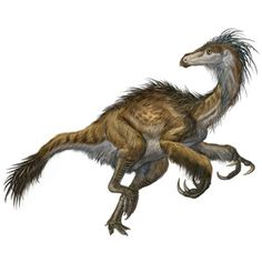 Beipiaosaurus (bye-PEE-oh-SORE-us) was a species of small but primitive therizinosaur closely related to Nothronychus and Therizinosaurus. It lived during the Mid Cretaceous Period 125 million years ago in what is now China, and at one point was the largest known dinosaur with feathers.