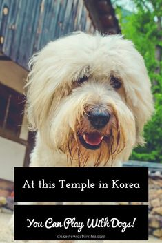 Want to see a Temple where you can play with Dogs? Visit this one in Korea.