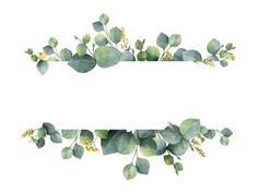 Watercolor vector green floral banner with silver dollar eucalyptus leaves and branches isolated on white background. Illustration about australia, banner, green, drawn - 117610737 Wedding Card Design, Wedding Designs, Wedding Cards, Wedding Invitations, Flower Svg, Flower Frame, Vegetal Concept, Feuille Eucalyptus, Floral Banners