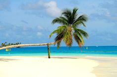 Palm Paradise Beach - Beach Travel Vacations | The Maldives