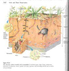 tipos de suelos - Buscar con Google