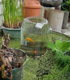 Aquaponics DIY Ideas - Elements For Aquaponics Plants - Some Thoughts - Larry Vandenberg