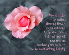 An affirmation about our inner beauty. Rose Quotes, Flower Quotes, Blooming Flowers, Fall Flowers, Optimism Quotes, Positive Motivation, Self Empowerment, What Is Need, Spiritual Awakening