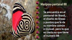 Las mariposas más hermosas y fascinantes del mundo - Imagenes Poemax