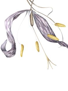 Fritillaria faded detail, in watercolor Tassel Necklace, Watercolor, Detail, Spring, Illustration, Jewelry, Design, Pen And Wash, Watercolor Painting