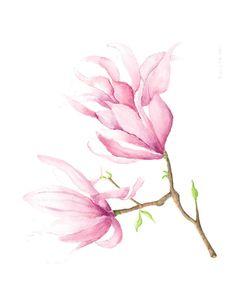 Magnolia watercolor painting by Susan Mahoney #pink #magnolia