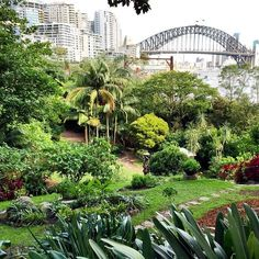Aust nsw sydney inner city suburbs surrounds on pinterest My secret garden bay city