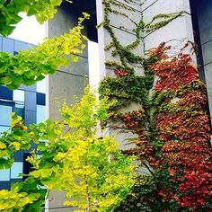 In transition! Photo credit and thanks to for the share. York University, School Photography, Photo Credit, Thankful, Fall, Plants, Instagram, Autumn, Fall Season