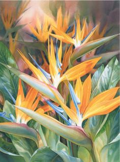 Beautiful flowers by Watercolour artist Darryl Trott Tropical Art, Tropical Flowers, Tropical Leaves, Watercolor Flowers, Watercolor Paintings, Watercolours, Strange Flowers, Types Of Flowers, Flower Pictures