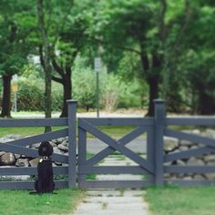 Crossbuck fence & gate painted a very dark charcoal for vegetable garden - Amy Beth Cupp Front Yard Fence, Farm Fence, Dog Fence, Fence Gate, Fencing, Fence Landscaping, Backyard Fences, Entry Gates, Front Gates