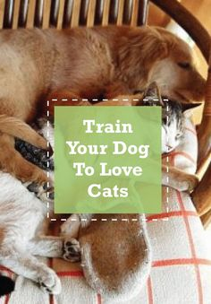 Fighting like cats and dogs? No more. Teach your dog not to chase cats.
