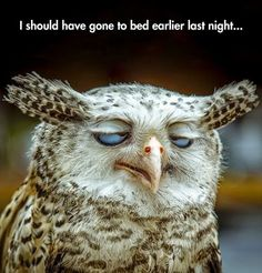 Funny Bed Earlier Tired Owl | Funny Joke Pictures