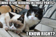 The 50 Funniest Grumpy Cat Memes - Grumpy Cat - Ideas of Grumpy Cat - Grumpy Cat and Pokey don't like thosepants. The post The 50 Funniest Grumpy Cat Memes appeared first on Cat Gig. Grumpy Cat Quotes, Funny Grumpy Cat Memes, Funny Cats, Funny Animals, Cute Animals, Grumpy Cats, Funny Jokes, Funny Minion, Cats Humor