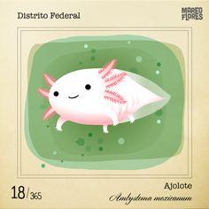 El dibujo del ajolote. Mario Flores.