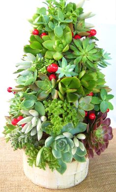 It looks like a succulent Christmas Tree! Its so cute!.