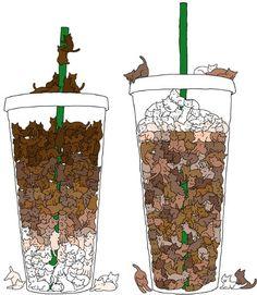 Starbucks cats