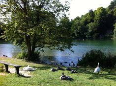 Swanbourne Lake in Arundel, West Sussex.  A fantastic place to go for a walk and have an ice cream with the kids and feed the ducks.  Or why not row a boat around the lake on a lovely sunny day