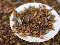 We may have a cultural aversion to ingesting insects, but bugs are a low-fat protein source that require far fewer resources to raise than cattle or pigs, and their farming is thought to emit fewer greenhouse gases.