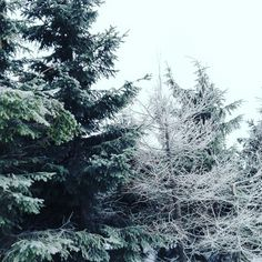 #forest #snow #winter
