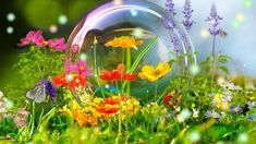 NatBG.com - Flowers Wild Flowers Butterfly Colorful Forest Meadow Bubble Spring Wallpaper For Desktop