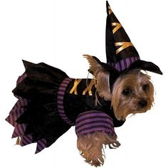 Forum Novelties 64042 Pet Witch Costume Small - For Dogs & Cats - http://www.thepuppy.org/forum-novelties-64042-pet-witch-costume-small-for-dogs-cats/