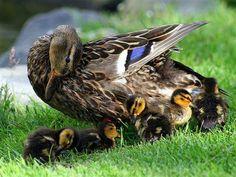 tenderness!!!