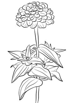 Zinnia Coloring Pages - Best Coloring Pages For Kids Rose Coloring Pages, Printable Flower Coloring Pages, Spring Coloring Pages, Doodle Coloring, Free Coloring, Coloring Pages For Kids, Flower Doodles, Botanical Art, Colorful Flowers