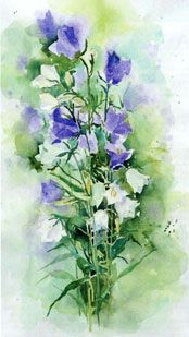 Projects/Watercolour Paintings