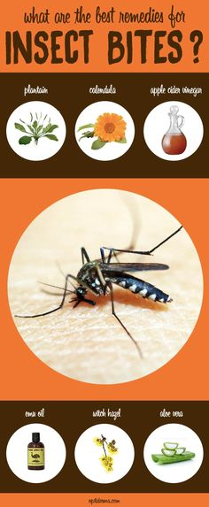 What are the Best Remedies for Insect Bites? Learn about Calendula, aloe vera, apple cider vinegar, plantain, emu oil and witch hazel: http://www.optiderma.com/articles/bug-bites-blister/