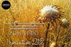 Arte y Diseño para Cristo