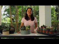 Cacti and succulents are super-trendy plants. Learn easy tips for success in this quick video (it's only 1 minute, 42 seconds long)! Kinds Of Cactus, Cactus Types, Types Of Succulents, Growing Succulents, Succulents In Containers, Cacti And Succulents, Planting Succulents, Succulent Favors, Succulent Pots