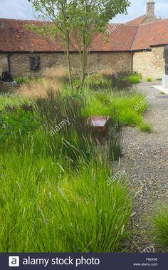 Sesleria autumnalis, Deschampsia 'Goldtau' and Molinia 'Moorhexe' Oudolf plantings in Cloister Garden at Durslade , Bruton, Some Stock Photo
