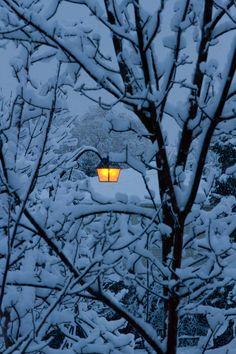 Warm glow of the light before sunrise by Lori Cammerota on – Winterbilder Winter Szenen, I Love Winter, Winter Magic, Winter Christmas, Winter Season, Winter's Tale, Before Sunrise, Snowy Day, Snowy Woods